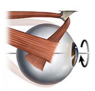 eye pulley